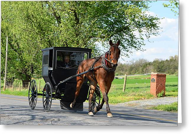 Saturday Buggy Ride Greeting Card
