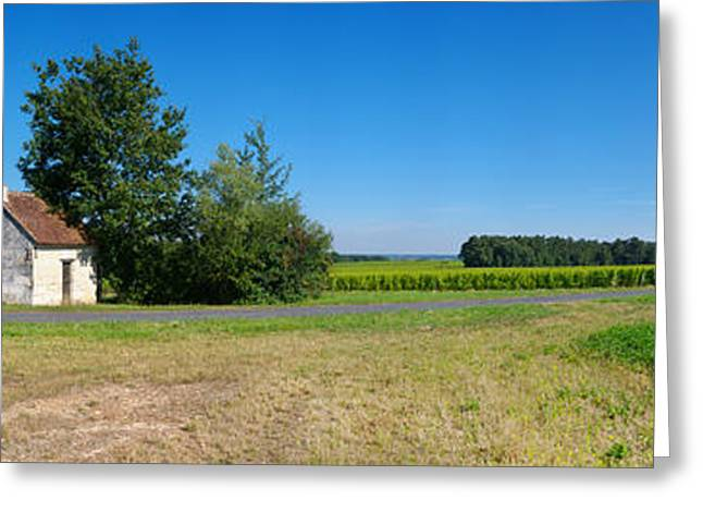 Sauvignon Blanc Vineyard, Pouille Greeting Card by Panoramic Images