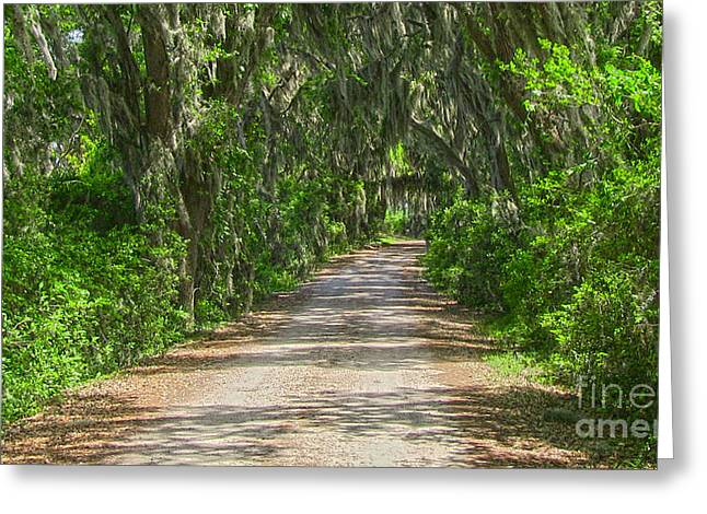 Savannah Country Road Greeting Card by D Wallace