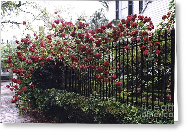 Savannah Georgia Red Roses And Gates Architecture Greeting Card