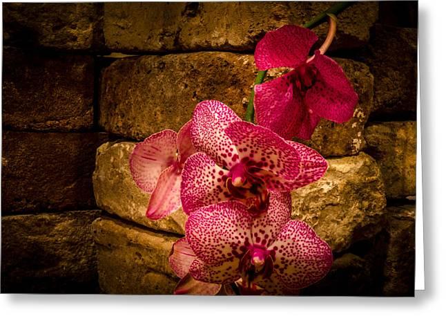 Savannah Grey Orchid Greeting Card by Richard Kook