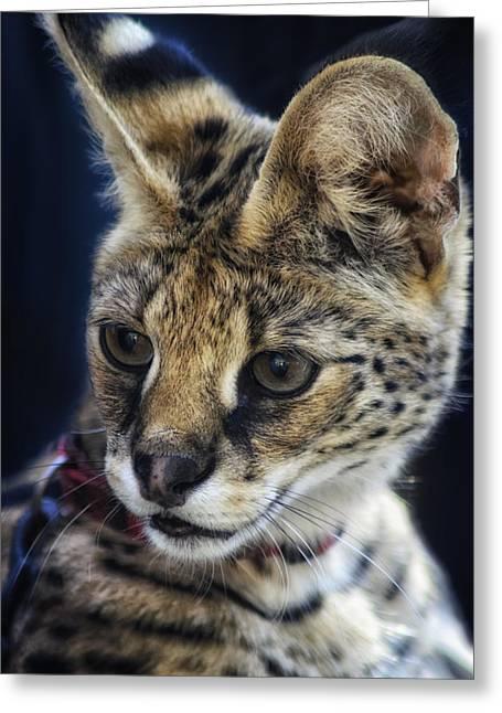 Savannah Jungle Cat Greeting Card