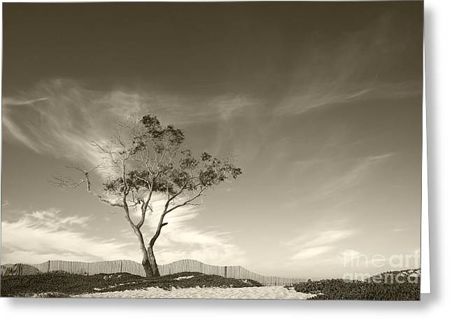 Save The Tree Greeting Card by Timothy Johnson