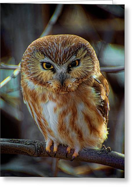 Greeting Card featuring the photograph Saw-whet Owl by Britt Runyon