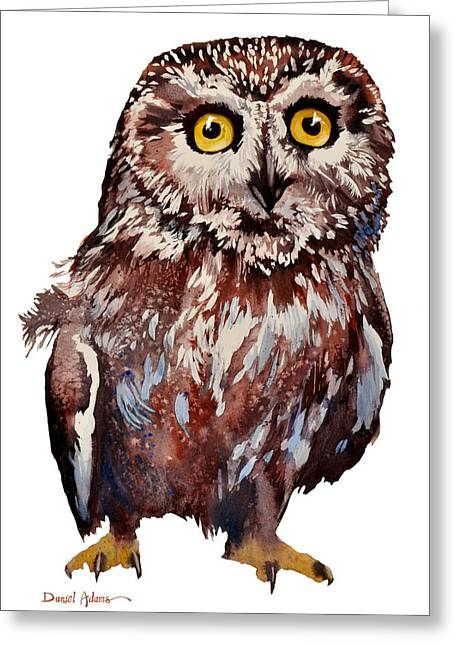 Da148 Saw Whet Owl Daniel Adams Greeting Card