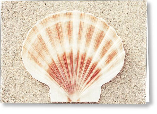 Scallop Shell Greeting Card by Carolyn Cochrane