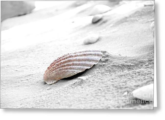 Greeting Card featuring the photograph Scallop Shell by Robert Meanor