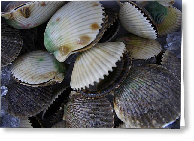 Scallops Greeting Card