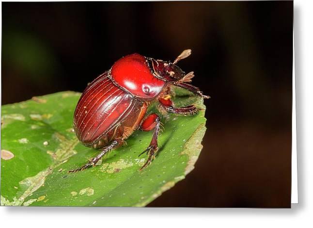 Scarab Beetle Greeting Card
