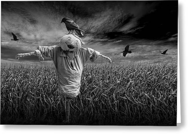 Scarecrow And Black Crows Over A Cornfield Greeting Card