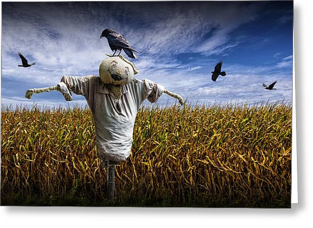 Scarecrow With Black Crows Over A Cornfield Greeting Card