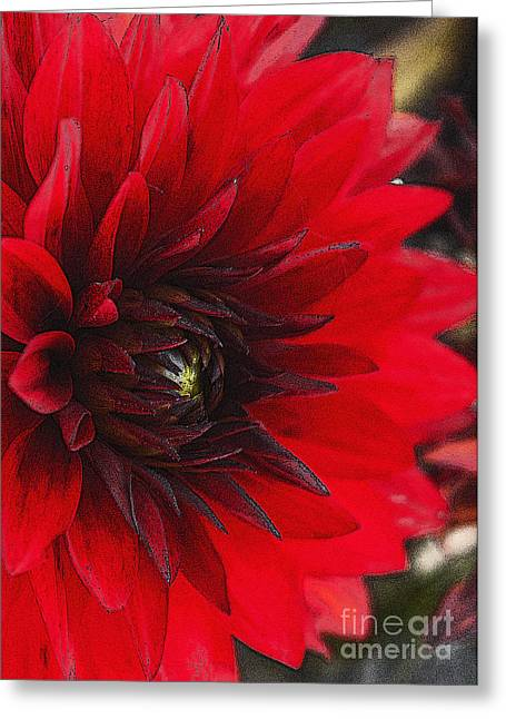 Scarlet Dahlia Greeting Card