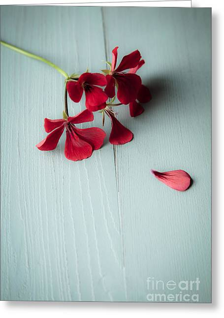 Scarlet Geranium Greeting Card