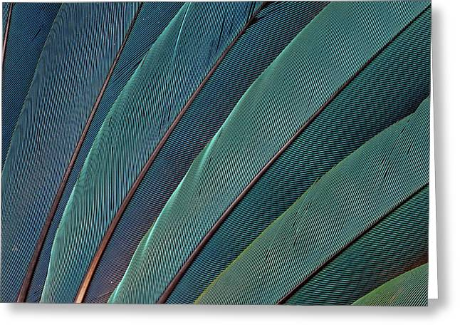 Scarlet Macaw Wing Feathers Greeting Card by Darrell Gulin