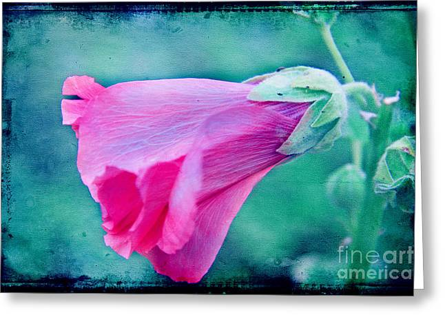Scarlet Mallow Greeting Card