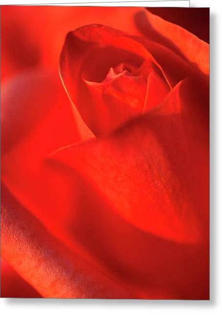 Scarlet Rose Abstract Greeting Card