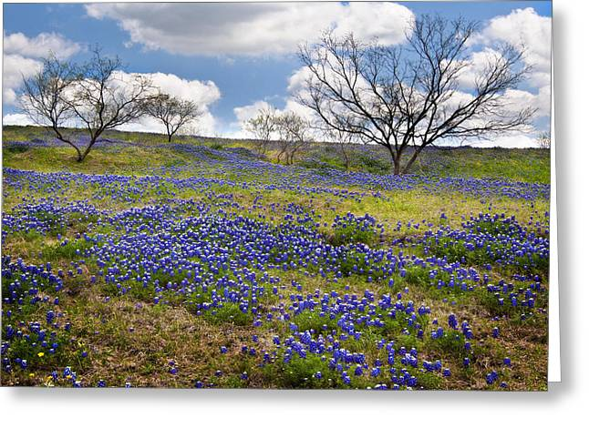 Scattered Bluebonnets Greeting Card