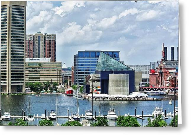 Scene From Federal Hill In June Greeting Card by Toni Martsoukos