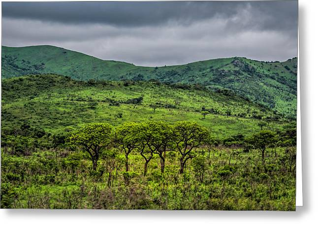 Kruger National Park Greeting Card by Maria Coulson