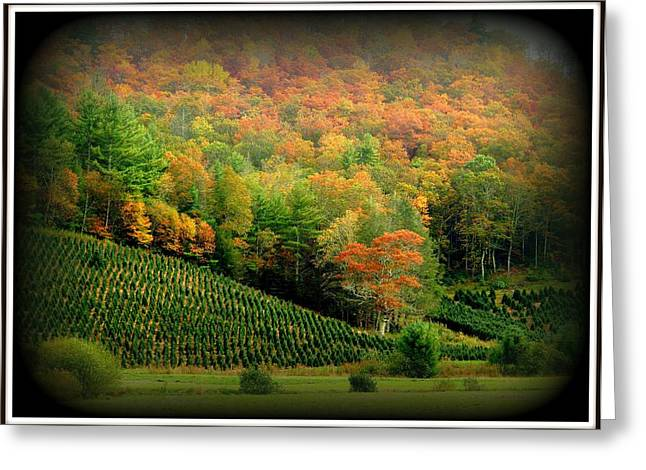 Scenic Blue Ridge Parkway Greeting Card by Toni Abdnour