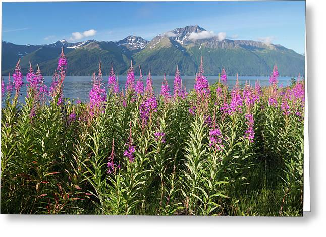 Scenic Landscape Of Fireweed Greeting Card by Doug Lindstrand