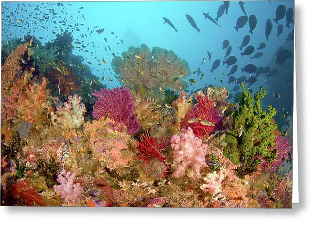Scenic Of Diverse Reef Life, Misool Greeting Card by Jaynes Gallery