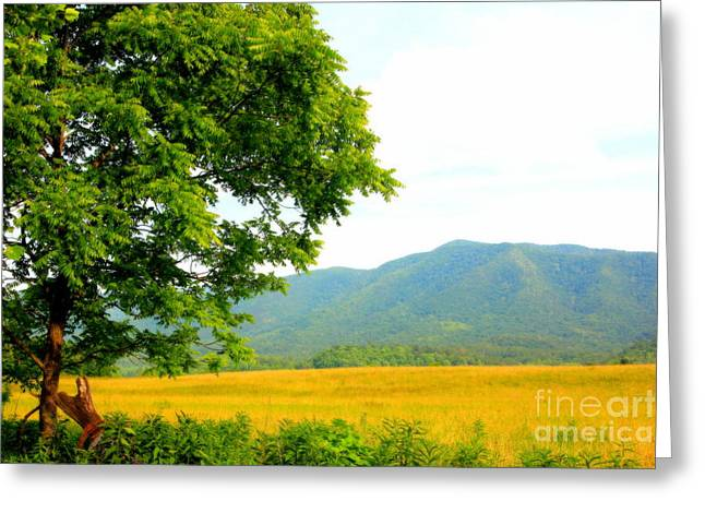 Scenic View Greeting Card