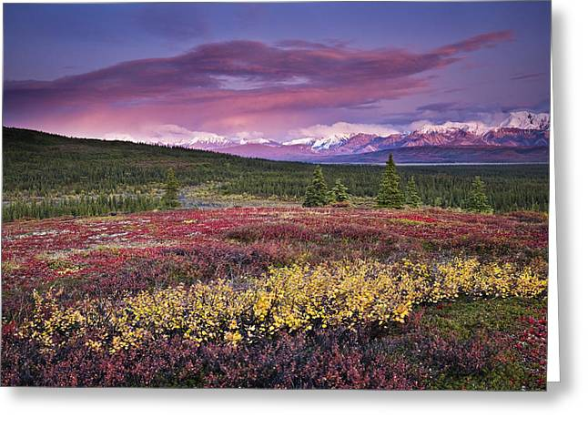 Scenic View Of Alpine Tundra With Greeting Card by John Delapp