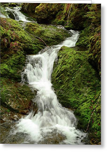 Scenic View Of Dickson Falls In Fundy Greeting Card