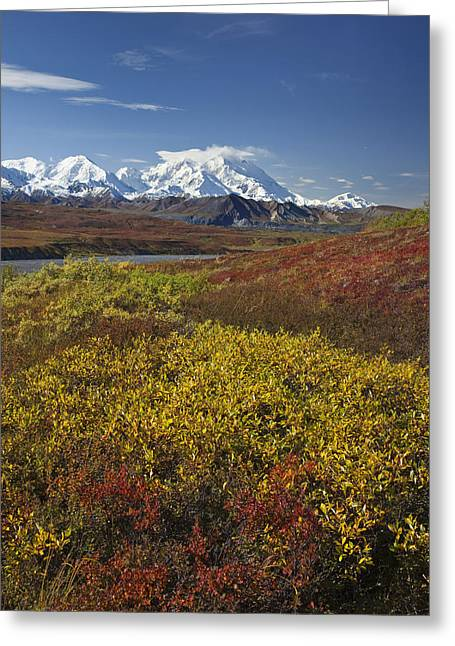 Scenic View Of Mt.mckinley From Greeting Card by John Delapp