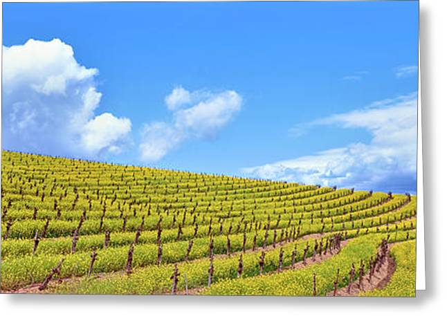 Scenic View Of Vineyard In Springtime Greeting Card
