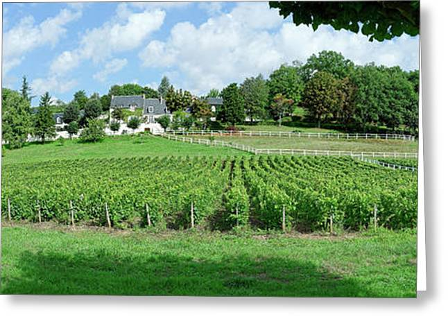 Scenic View Of Vineyard, Vouvray Greeting Card by Panoramic Images