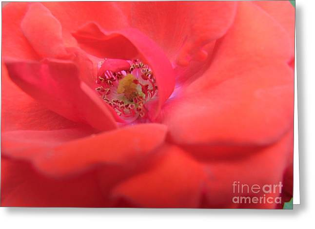 Greeting Card featuring the photograph Scent Of Pleasure by Agnieszka Ledwon
