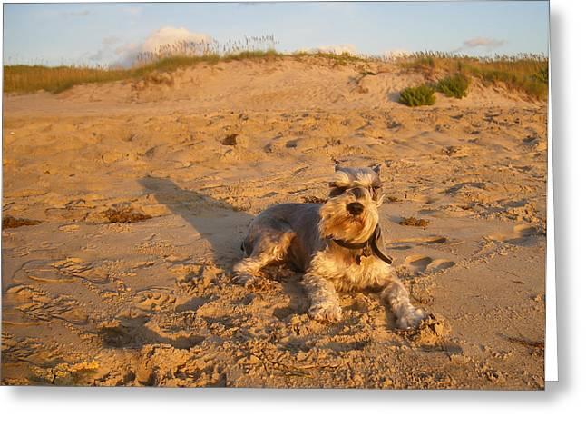 Schnauzer At Dawn Greeting Card by Stacy Abbott