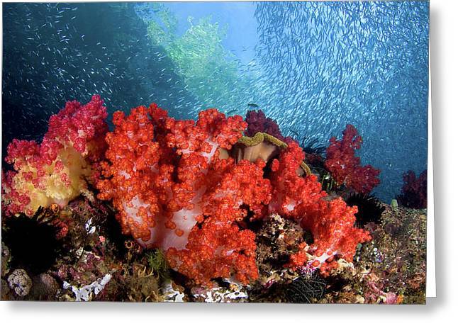 Schooling Baitfish Swim Past Coral Greeting Card