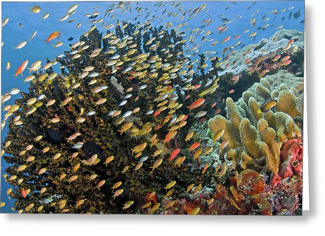 Schooling Fish Swim Past Reef Corals Greeting Card by Jaynes Gallery