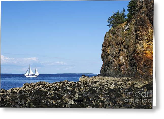 Schooner Sailing In The Bay Greeting Card