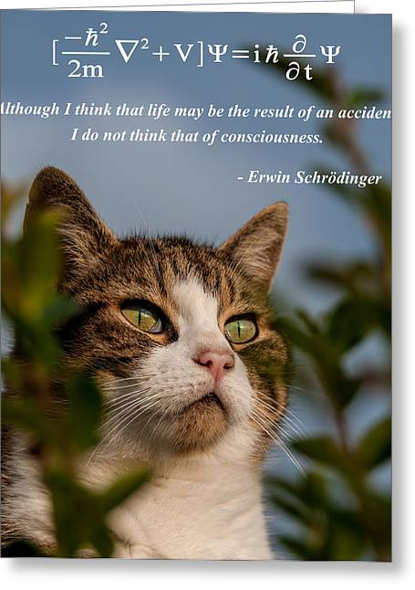 Schrodinger's Cat Greeting Card by Alex Hiemstra