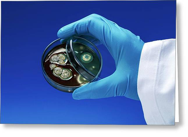 Scientist With Petri Dish Greeting Card by Wladimir Bulgar