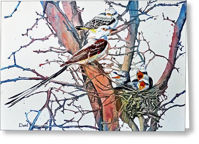 Da149 Scissortailed Flycatchers By Daniel Adams Greeting Card