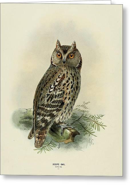 Scops Owl  Greeting Card by Rob Dreyer