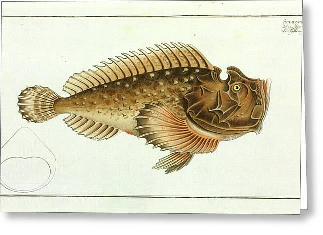 Scorpaena Horrida (synanceia Horrida) Greeting Card