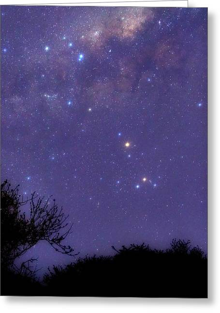 Scorpius Greeting Card by Luis Argerich