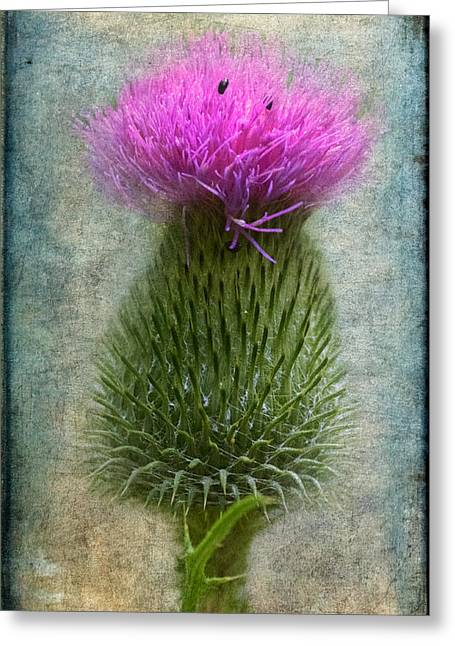 Scotch Thistle Greeting Card