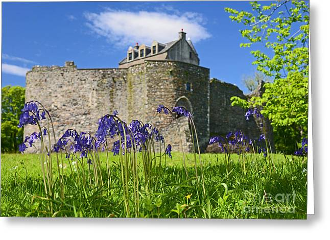 Scots Spring Bluebell Flowers At Scotland Dunstaffnage Castle  Greeting Card