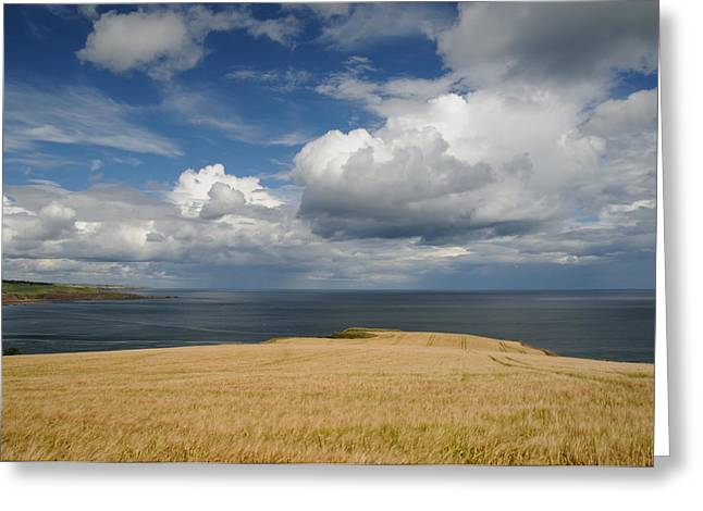 Scottish Coastal Wheatfield Greeting Card by Jeremy Voisey