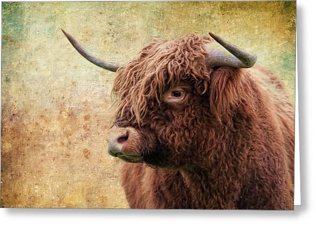 Scottish Highland Steer Greeting Card by Steve McKinzie