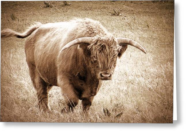 Greeting Card featuring the photograph Scottish Highlander Bull by Karen Shackles
