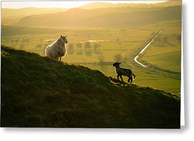 Scottish Sheep And Lamb Greeting Card by Mr Doomits