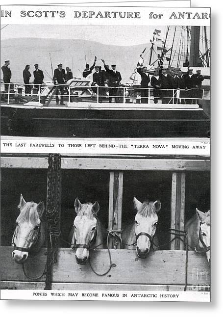 Scotts Departure For Antarctica Ponies Greeting Card by Mary Evans